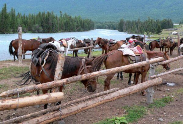 Das Erbe der Nomaden: Am Kanas-See werden Reittouren angeboten.