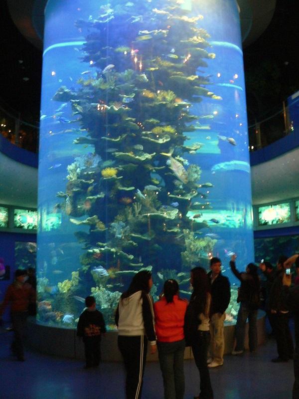 Das grösste freistehende Aquarium der Welt.