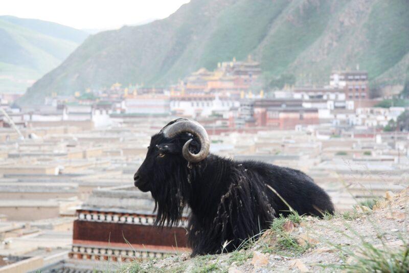 Blick auf das Kloster von Xiahe.