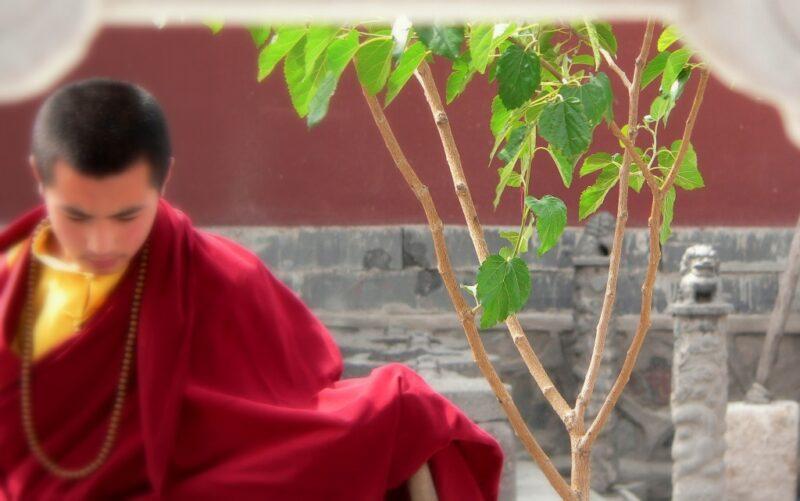 Tibetischer Mönch.